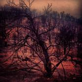 This was taken back in June 2013 during the wildfires that swept parts of Colorado that year. This was taken on the edge of Cañon City just one day after the fire. As welcome news as it was that no one had been injured or killed in the fire, it was so saddening to see so much nature dead. As you can see, everything within sight was desolate and the ground still seemed to have a reddish glow to the soil. We weren't allowed to venture past this point due to the still-hovering smoke in the area.